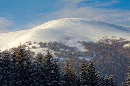Snowy hill, blue sky, evergreens, Carpathians, Ukraine  photo
