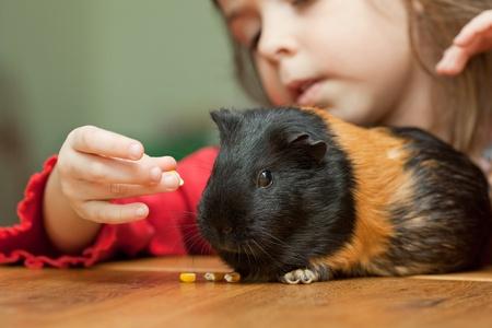 cavie: Bambina cavia alimentazione sul tavolo di casa