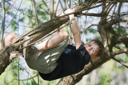 recreational climbing: Young boy hanging from a branch in a tree on sunny day