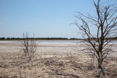 salinity: Coast salt lake at Kinburn Spit, Ukraine  Soil salinity  Dead plants  Hot summer