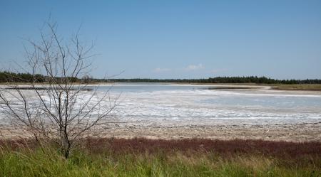 salinity: Coast salt lake at Kinburn Spit, Ukrainian steppe  Soil salinity  Natural salt  Dead plant  Hot summer