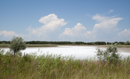 Soil salinity in the hot summer  Kinburn Spit, Ukraine Stock Photo - 14690613