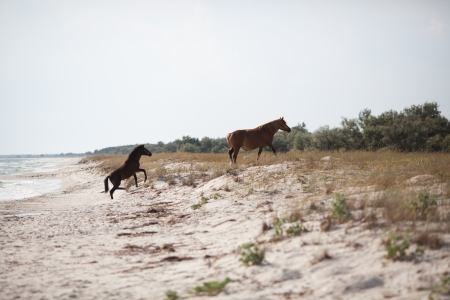 Two wild horses playing on the beach Stock Photo - 14690604