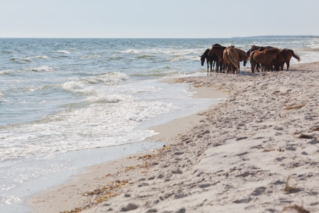 Group of wild horses at sea line  Kinburn Spit, Black Sea, Ukraine Stock Photo - 15285413