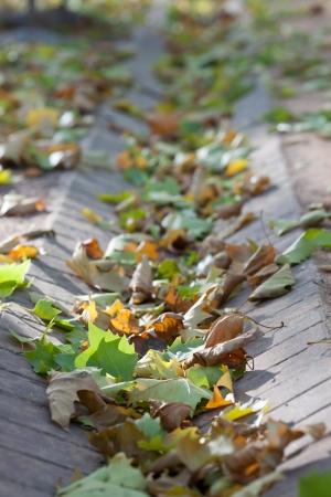 runnel: Autumn park, fallen leaves, detail