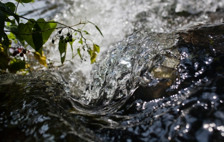 Close up of water rushing over rock with green leaves and berries