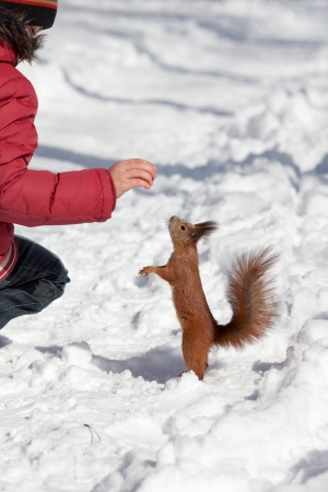 Red squirrel and child with nuts in the winter park photo