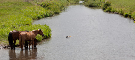 Horses on the river photo
