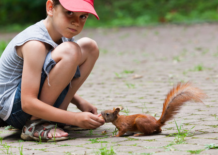 Cute little boy feeding squirrel at park photo