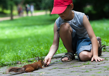 Little boy feeding squirrel at park photo