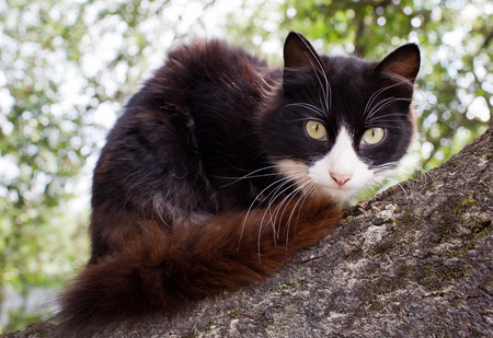Cute cat up a tree in garden on the leaves  photo