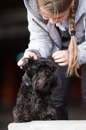 affectionate actions: Girl with black miniature schnauzer on a walk Stock Photo