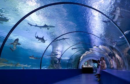 Children inside the tunnel of the oceanarium at the aquarium Archivio Fotografico