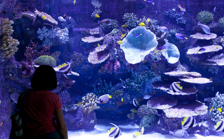 Woman looks at the fish at the aquarium photo