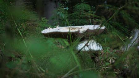 The mushroom season has started