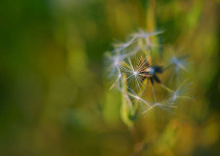 Beautiful closeup of green nature.