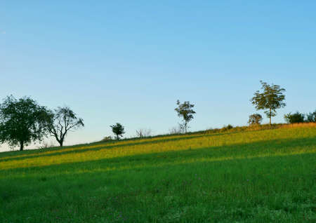 Beautiful landscape view of green nature.