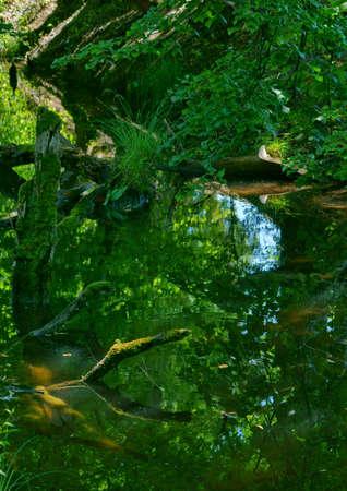 beautiful green nature near the aare river in Switzerland Stock fotó - 155444194