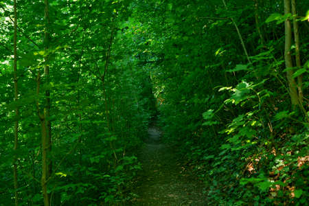 beautiful pathway in the woods near the aare river