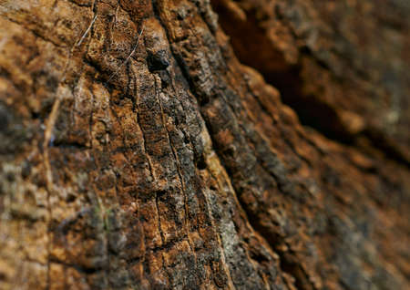 beautiful pattern and texture, close up of a tree in the woods Stock fotó - 155963985