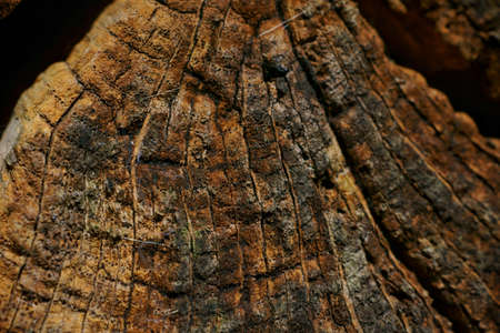 beautiful pattern and texture, close up of a tree in the woods Stock fotó