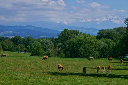 beautiful landscape view of the green fields in switzerland Stock fotó