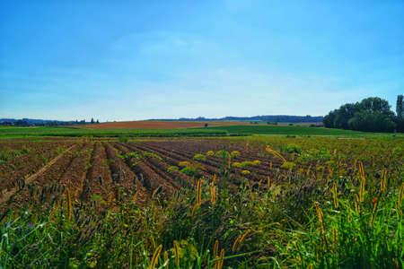beautiful landscape view of the green fields in the countryside in jegenstorf, switzerland Stock fotó - 156292613