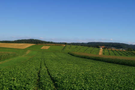 beautiful landscape view of the green natural  swiss countryside in jegestorf Stock fotó - 156531645