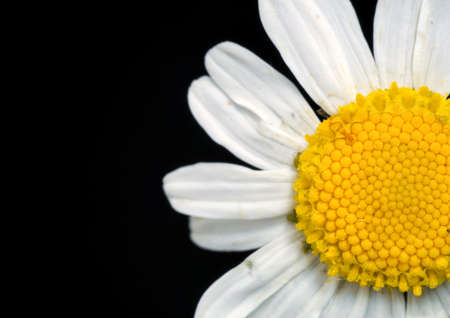 Beautiful macro close up view of a daisy flower. at the Bahnstadt in Heidelberg, Germany