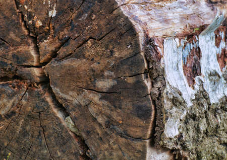Beautiful texture and details of old cut trees at the farm fields. at the Bahnstadt in Heidelberg, Germany