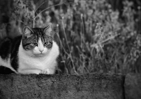 Beautiful cute cat at the farm fields. at the Bahnstadt in Heidelberg, Germany