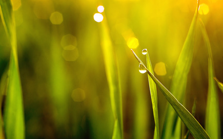 drops of dew on a green grass. Stock Photo