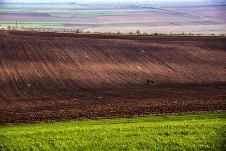 siembra: Campo agrícola. La tierra cultivable en la primavera, listo para la temporada de siembra