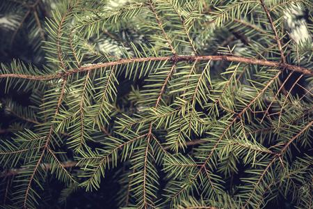 Achtergrond van de takken van de kerstboom in de winter.