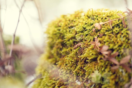 nature conservancy: Leaf on Moss