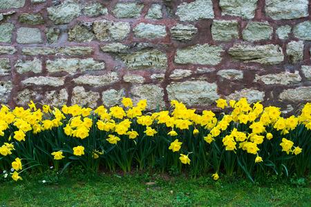 Spring landscape with colorful flowers Standard-Bild