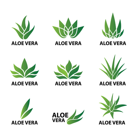 Aloe vera nature leaf icon , logo vector illustration