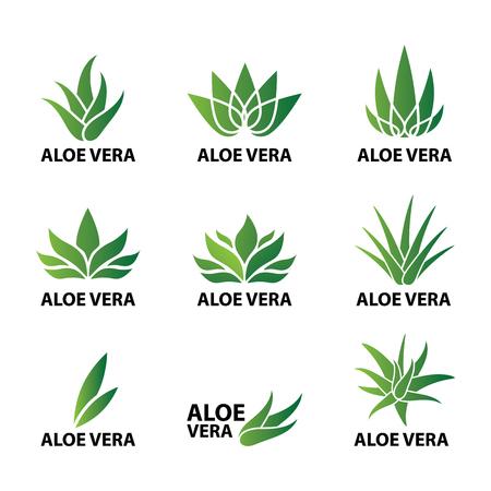 Aloe vera nature leaf icon , logo vector illustration Vettoriali