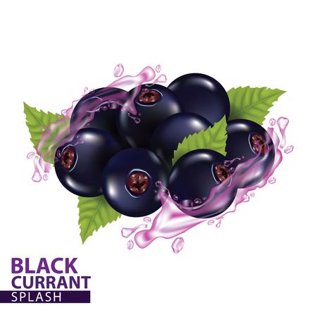 Black currant splash vector illustration