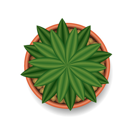 cactus top view vector illustration Ilustracja