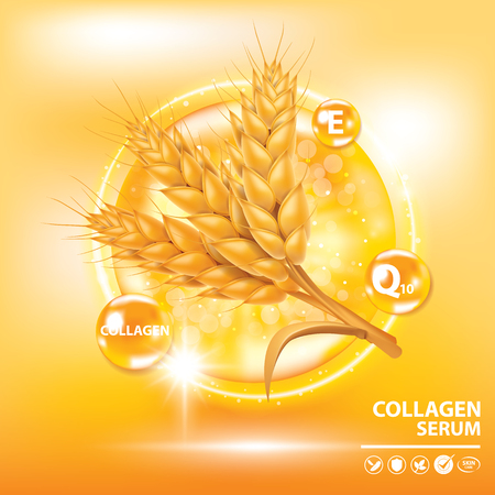 Rice , wheat , barley and oat vitamin  banner vector illustration