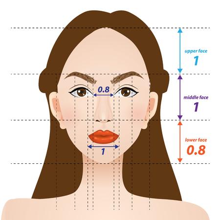 perfecte gezichtsverhoudingen vector illustratie
