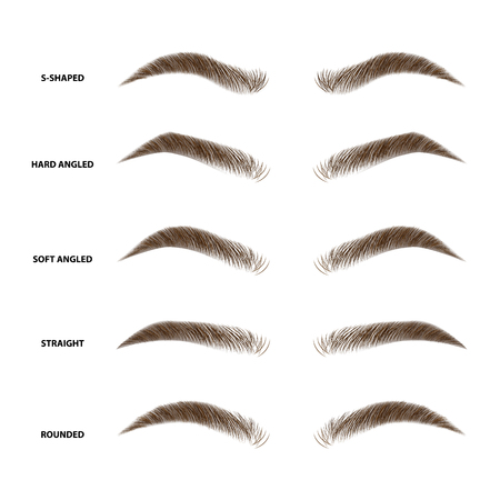 Types of eyebrows vector illustration