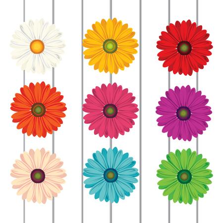 gerbera flower on white wood vector illustration