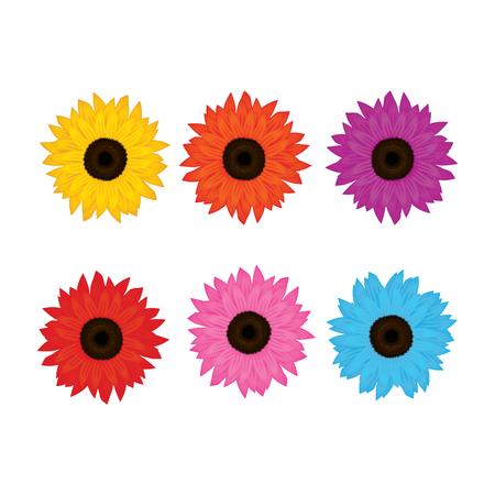 gerbera flower vector illustration