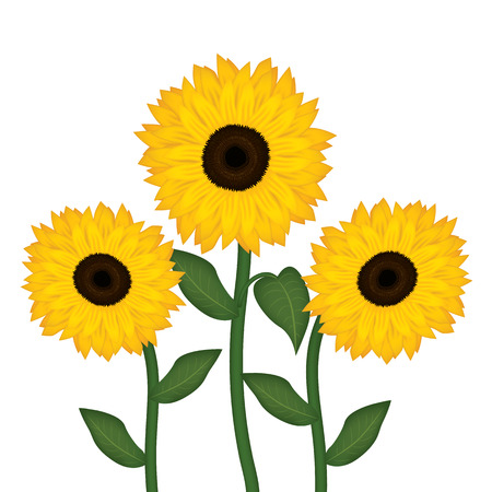 three sunflowers on white background vector illustration Stock Illustratie