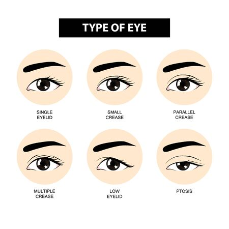 Art der Augenlidfalte-Vektorillustration