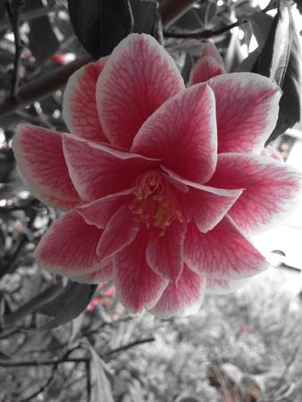 close: Flower close up