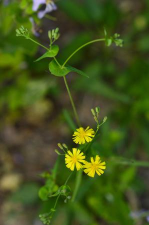 petites fleurs: Suit petites fleurs Banque d'images