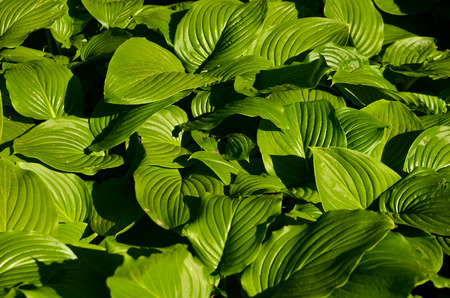 acres: Acres of green leaves